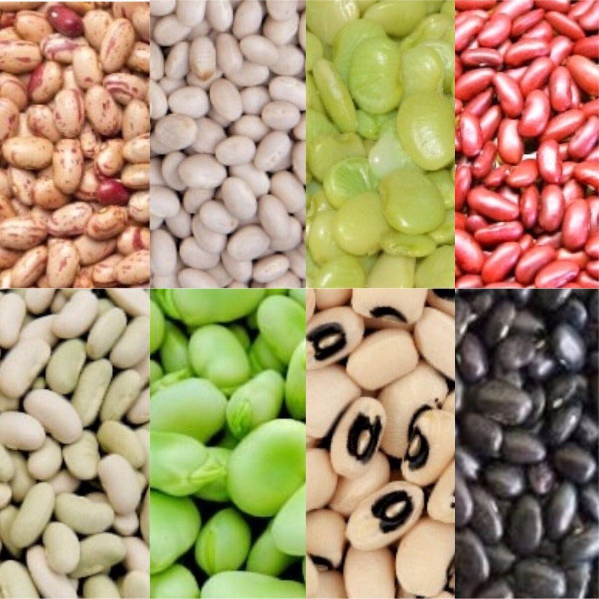 Beans, Beans, Beans